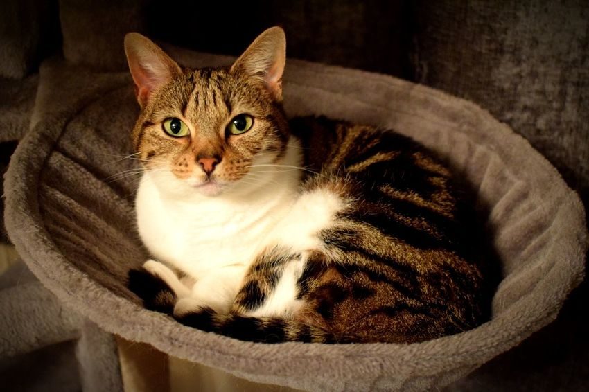 Chilling in her domain 🐱 Domestic Cat Pets Portrait Feline Looking At Camera Domestic Animals One Animal Indoors  Whisker Home Interior Mammal Cute Animal Themes No People Kitten Close-up Day Satisfied  Content