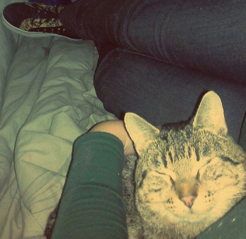 Junior, amor de mamá ♡ Cat♡ Ilovemycat Catlovers I Love Cats Consentido Amorgatuno Rayas Mimado Atigrado Cat Lovers