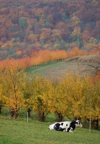 Atmosphrere Autumligh Autumn Blackforest Colours First Eyeem Photo Light And Shadow Müllheim Schwarzweiß View Wine Lost In The Landscape
