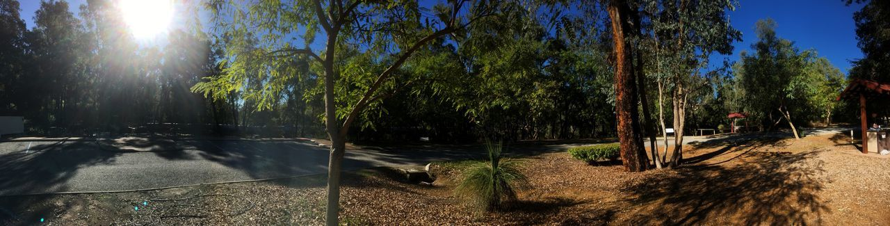 Mountain side park panorama Panoramic View Sunlight Tree Plant Nature Growth Sunbeam Tranquility Sunny Outdoors