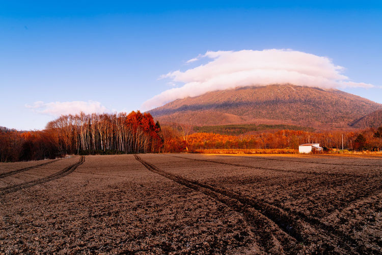 Harvested farmland, white farmhouses, red edar trees in Autumn at foot of Mt. Yotei, Hokkaido, Japan. Tranquil Scene Scenics - Nature Landscape Sky Land Mountain Environment Beauty In Nature Cloud - Sky Tranquility Nature Rural Scene Agriculture Travel Travel Photography Japan Hokkaido Mount Yōtei Yotei Mt. Farmland Farmhouses Autumn colors Harvested Trees Yotei