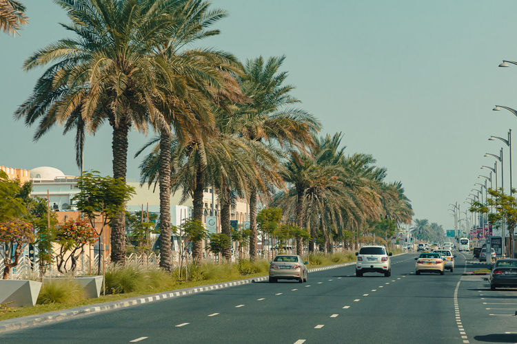 Palm trees by road in city against clear sky