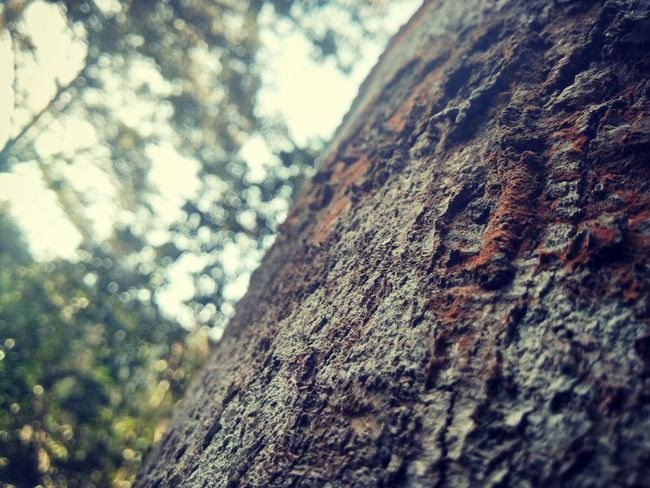 Low Angle View Textured  Day Rough Outdoors Nature Tree Close-up Sky No People Tree Trunk