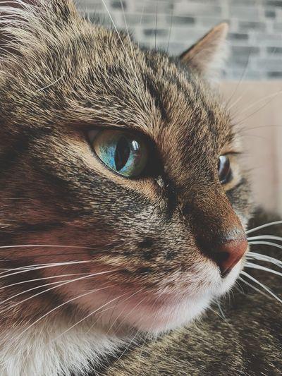 Cat Feline Pets