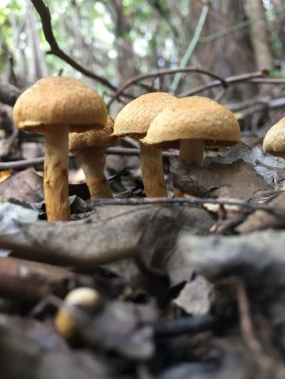 Mushroom Fungus Food Vegetable Toadstool Land Growth Plant Tree Close-up Selective Focus Nature Edible Mushroom Food And Drink Day No People Forest Field Beauty In Nature Outdoors Surface Level