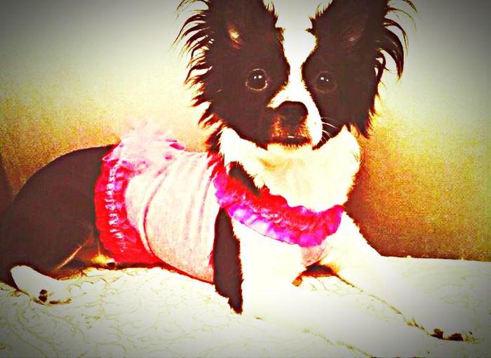 Maya 😍😍 Dog Friends Doggy