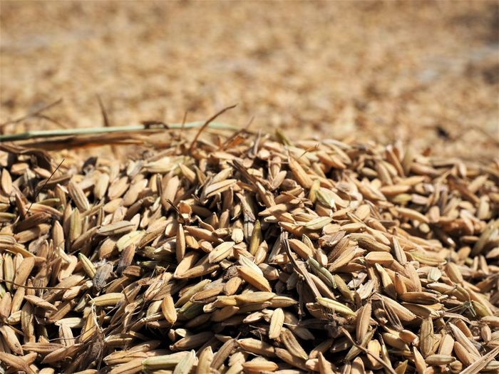Abundance Agriculture Barley Brown Cereal Plant Close-up Crop  Dry Focus On Foreground Food Food And Drink Freshness Healthy Eating Heap Large Group Of Objects Nature No People Plant Rice Corns Seed Wellbeing