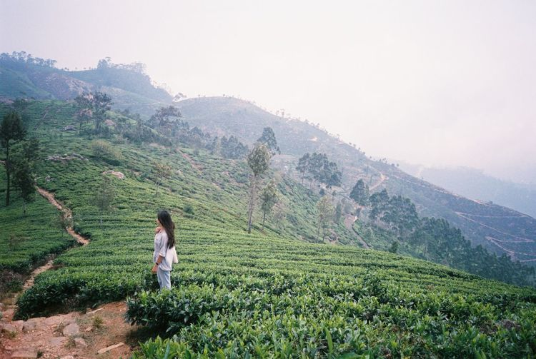 Lost In The Landscape Agriculture Nature Sri Lanka Field One Person Real People Green Color Tea Crop Full Length Growth Landscape Plant Outdoors Women Day Beauty In Nature Mountain Only Women Film Photography Filmisnotdead Teafarm Landscape_Collection Film