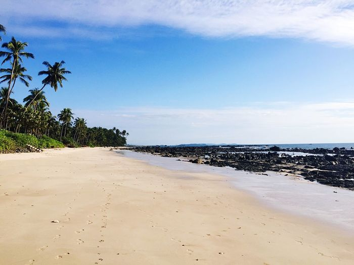 Beach Sea Sand Palm Tree Beauty In Nature Sky Nature Tranquility Tranquil Scene Water Scenics Horizon Over Water No People Vacations Day Outdoors Tree Ngapali Myanmar Private Beach Alone Holiday Luxury Getaway No One