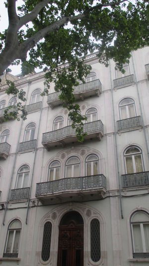 Architecture Beautiful Branches Branches Building Exterior Cityscape Closed Windows Dark Green Leaves Day Door Façade Lisbon Lisbon Architecture Low Angle View Nature And Architecture No People Old Architecture Old Building In Lisbon Old Buildings Old Windows Outdoors Spring Terrace Urban Details White Building Windows