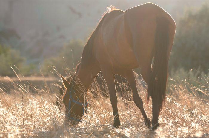 Kapadokya Turkey Horse Sunset D300s Nikon Nature Outdoors Animal Wildlife Domestic Animals Day