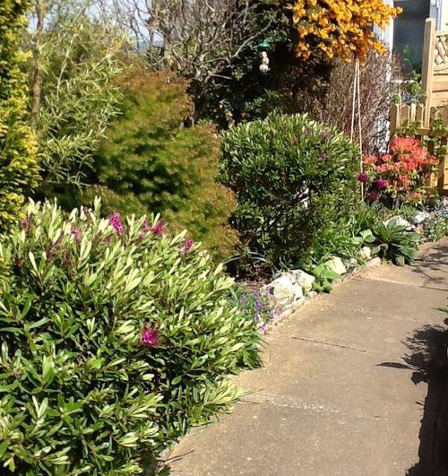 My garden path