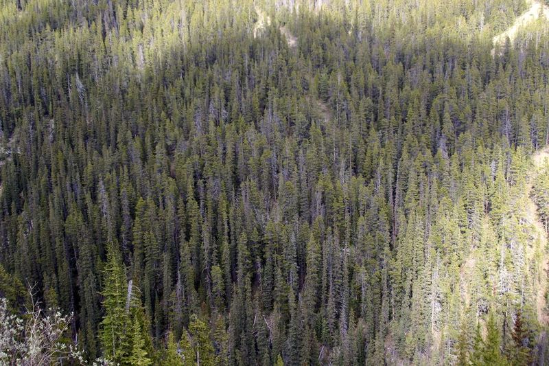 Deep Forrest Canada British Columbia Mountains Mountain View Top Perspective Deep Forrest