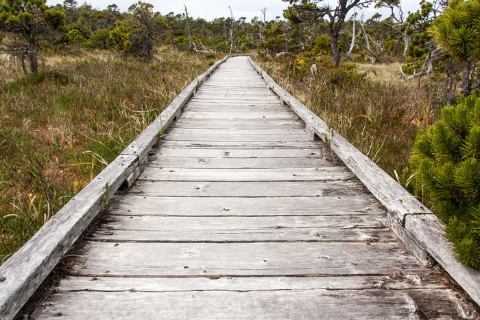 Adventure Boardwalk British Columbia Canada Growth Landscape Long Beach Ocean Outdoors Pacific Rim Plant Rugged The Way Forward Tofino Tranquil Scene Tranquility Tree Ucluelet Vancouver Island Wild Pacific Trail Wilderness Wilderness Adventure Wildernessculture Wood - Material Wooden