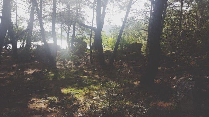 Forest Nature Tree Tranquility Tranquil Scene Tree Trunk Day WoodLand No People Sunlight Landscape Growth Scenics Outdoors Fog Sky Manzara Dediğin  Beauty In Nature EyeEm Best Shots