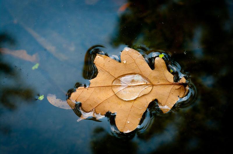 Close-up of autumn leaf on lake