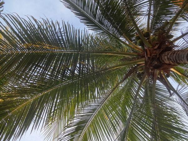 Coconut Coconut Trees Happiness Nature Paradise Beach Sky And Sea Sun Reflection On Water Sunrise Sunrise On The Beach Sunset