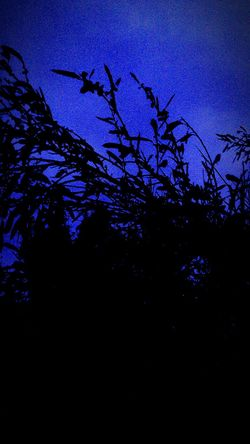The Dark Forest Nature Taking Photos Playing With The Shadows Injoying Life
