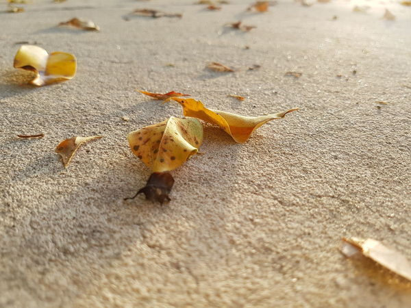 Fallen dry leaves. EyeEm Selects Beach Sand Close-up Leaves Fallen Fall Ground