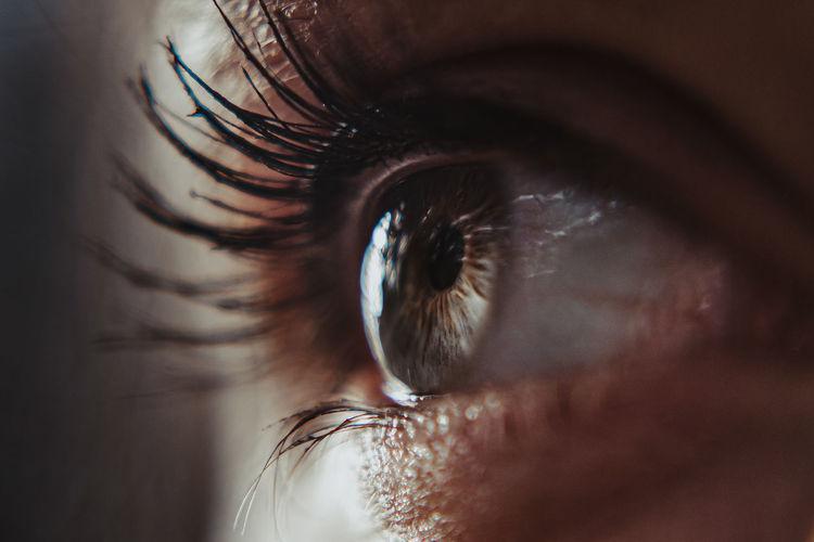 Human Eye Eye