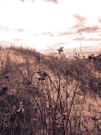 Cloud - Sky Day Dried Plant Growth Nature No People Plant Scenics Sky Tall Grass Tranquil Scene Tranquility Water