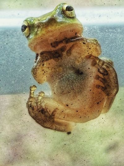 Frog on the