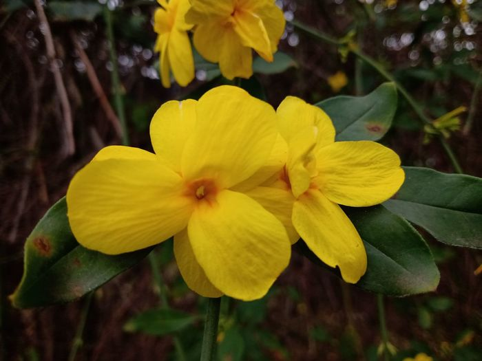 Close-up of yellow flowering plant in park