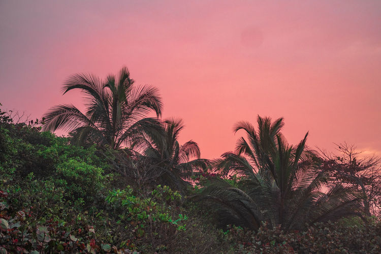 Sky Plant Tree Sunset Palm Tree Beauty In Nature Growth No People Tropical Climate Nature Scenics - Nature Tranquility Tranquil Scene Outdoors Pink Color Land Idyllic Non-urban Scene Copy Space Environment Landscape Nature Beach Dream Red Skyscape Palm Tree Tree Vacations Tourism Caribbean Blue Green Color