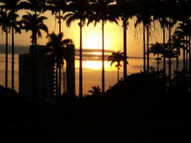 Sunset_collection Light And Shadow Sunset Silhouettes Contrast Sunset Palm Trees