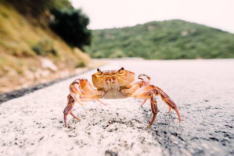 close up photography Animal Animal Themes Animal Wildlife Animals In The Wild Beach Claw Close-up Crab Crustacean Day Insect Land Marine Nature No People One Animal Outdoors Sand Sea Sea Life Surface Level