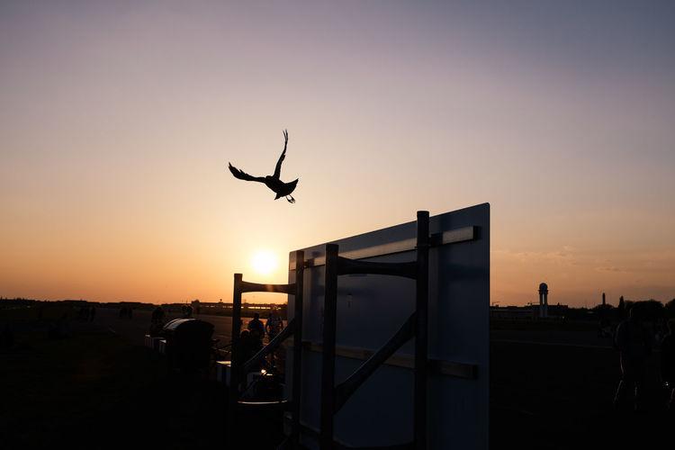 Animals In The Wild Bird Clear Sky Flying Light Mid-air Spread Wings Tempelhofer Feld