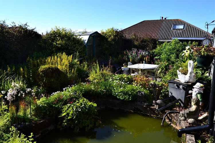 The traditional British garden pond with the odd gnome, a swan and an old clock. Built Structure Building Exterior Architecture Plant Sky Tree Nature Water Building House No People Day Growth Outdoors Clear Sky Sunlight Lake Residential District Garden Pond Garden Photography Garden Gnome Clock Station Clock Swan