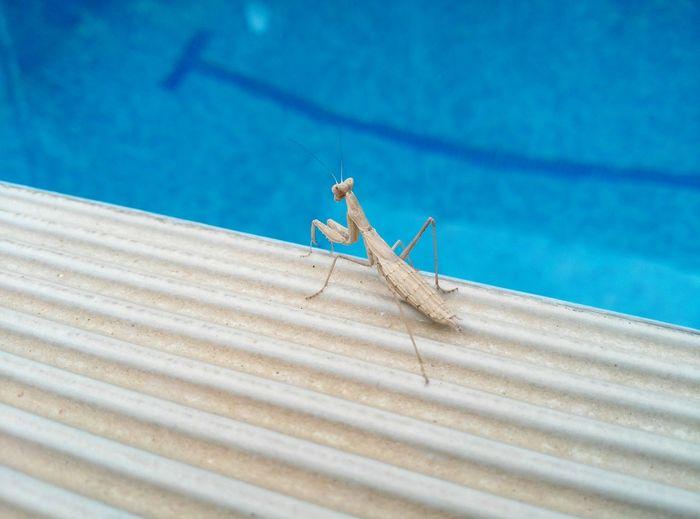 High angle view of praying mantis on roof
