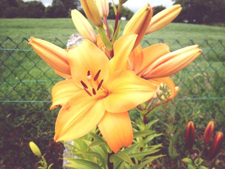 Flower Detail Taking Photos