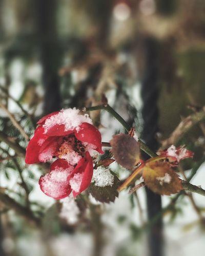 花も凍えます Nature Flower IPhoneography Plants