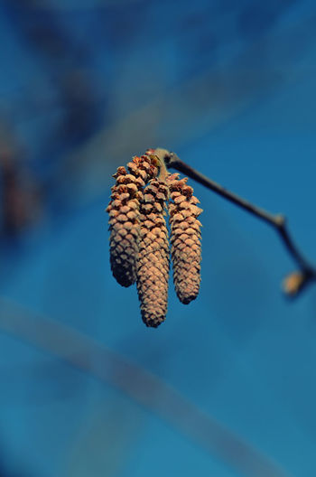 Low angle view of dried plant against blue sky