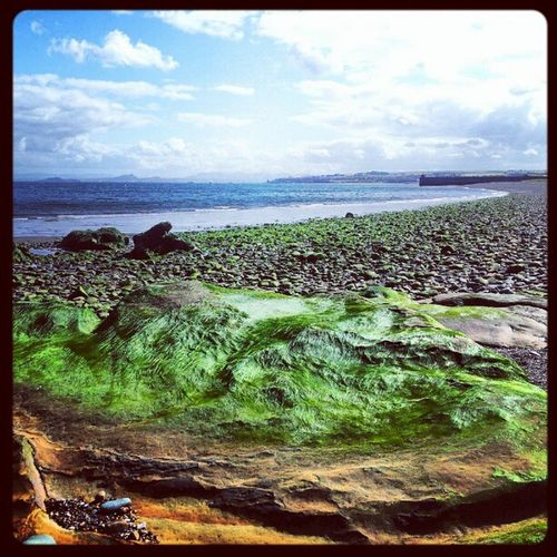 'I think the Hulk has melted' Seaweed Beach Seascape Ravenscraig kirkcaldy Scotland Cloudporn sky skyporn igscotland igtube Igers igdaily Tagstagram most_deserving iphonesia photographyoftheday insta_shutter instagood instamob instamood instagrammers picoftheday bestoftheday thebestshooter haggismunchers