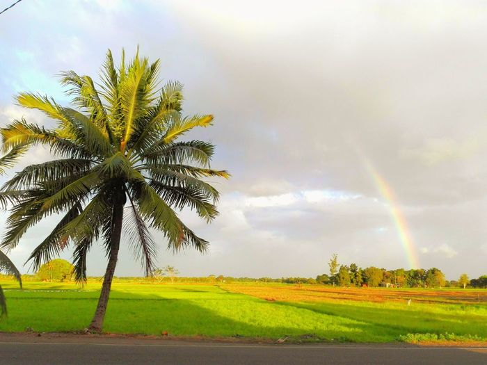 Rainbow Tree Beauty In Nature Rural Scene Scenics Nature Landscape Grass Sky Outdoors Tranquility No People Growth Day Adventureisoutthere Bemorebarrio SiBulacan Sinopinas Whereyouat Wheretonext Travel Explore Discover