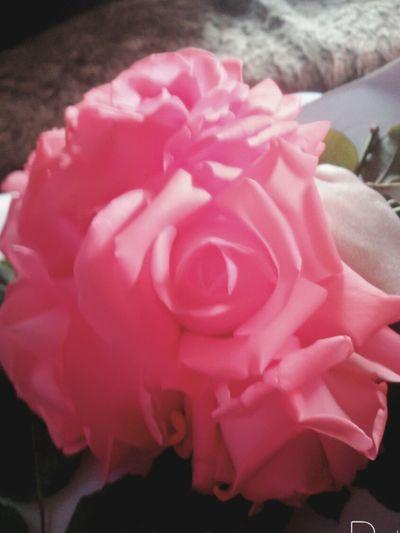 Flower Pink Color Rose - Flower Flower 🌸