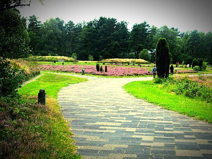 Bergen-Belsen Zweiter Weltkrieg Worldwar2 Memorial Gedenkstätte Cementery