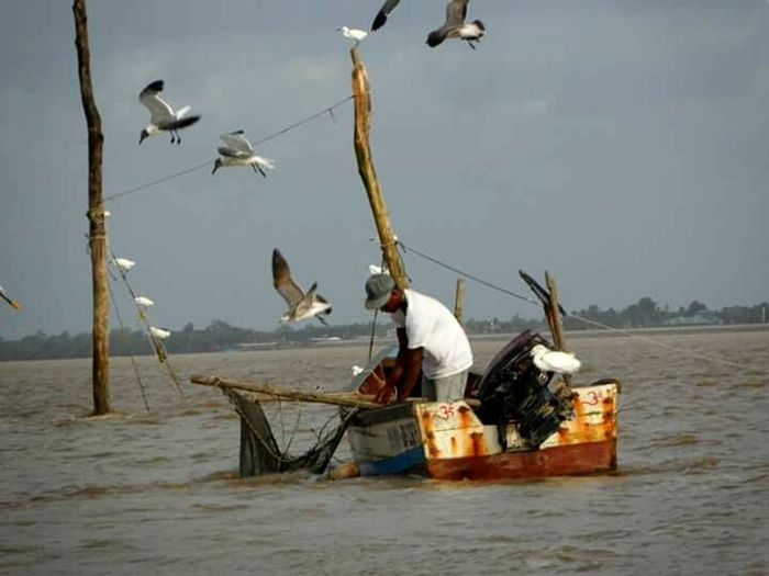 Fisherman Fisherboat Nature Fishing Net Suriname