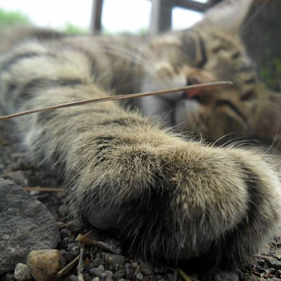 Animal Themes One Animal Animals In The Wild Focus On Foreground Rock - Object Wildlife Close-up Mammal Animal Hair Whisker Zoo Day Animal Head  Zoology Rock No People Gato Gatos Cat Fotonatural Photo Fotografia Foto Fotography Camaras