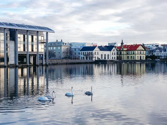 Ducks swimming in lake against buildings