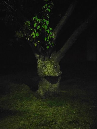 Tree with face Tree Face Facetree Nature Nightphotography Night Photography Tree Black Background Shadow Close-up Plant Grass Green Color Growing Blooming
