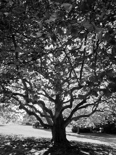 Tree Branch Shadow Sunlight Backgrounds Full Frame Sky