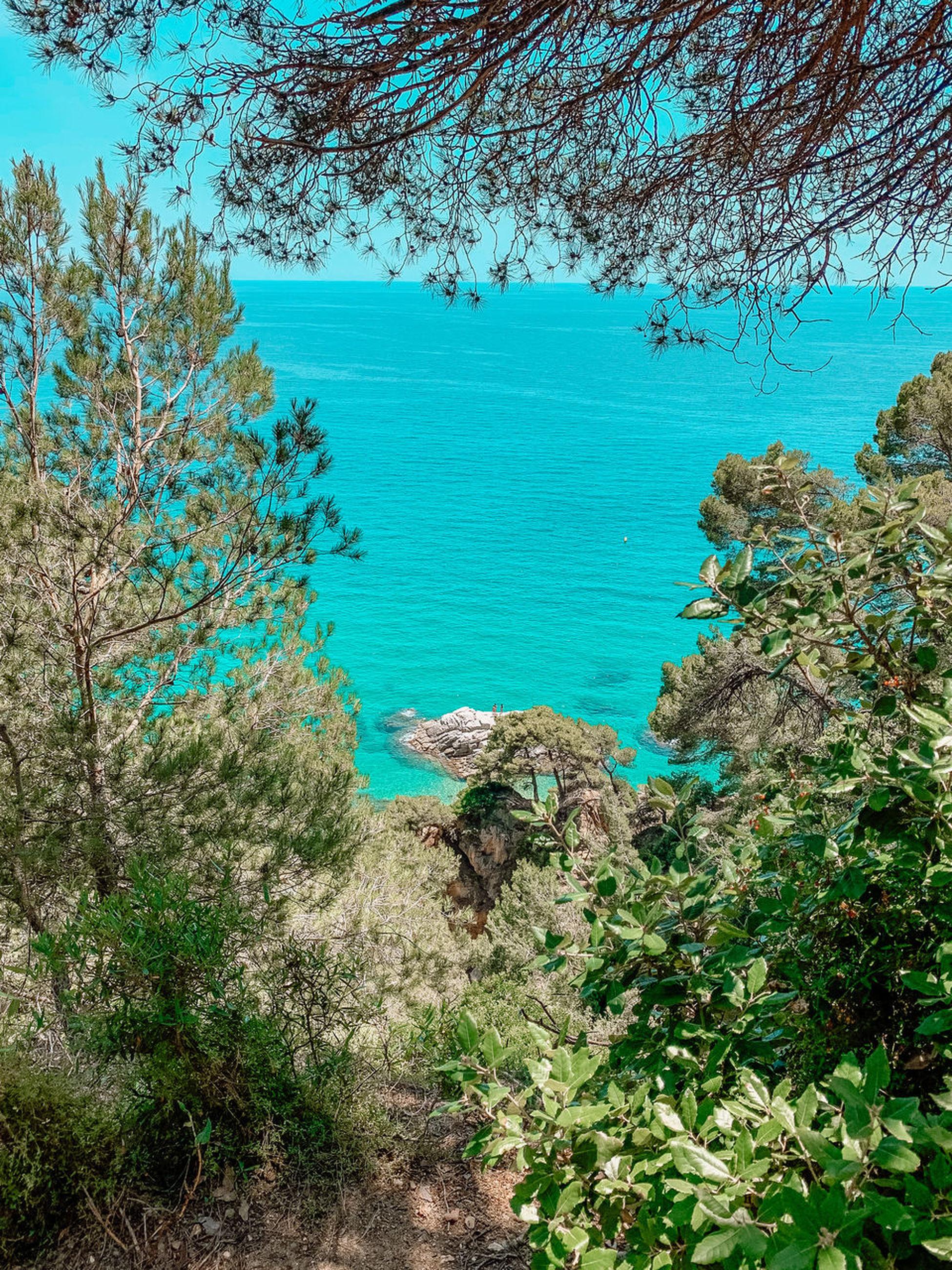 HIGH ANGLE VIEW OF TREES ON SEA