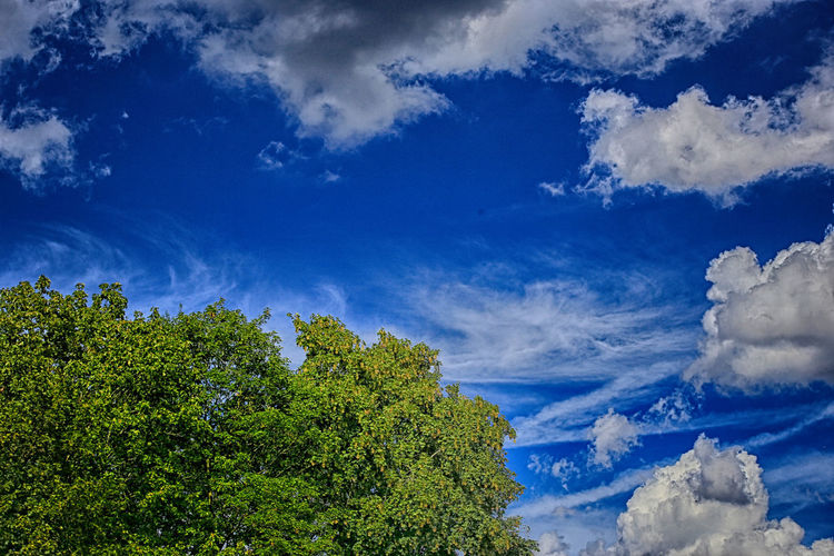 Beauty In Nature Blue Cloud - Sky Nature No People Outdoors Sky Treetop
