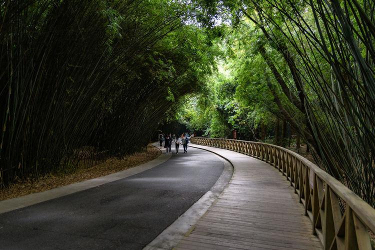 a manmade path