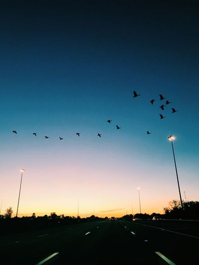 Large Group Of Animals Animal Themes Bird Animals In The Wild Flying Flock Of Birds Silhouette Animal Wildlife No People Nature Sunset Beauty In Nature Outdoors Sky Day