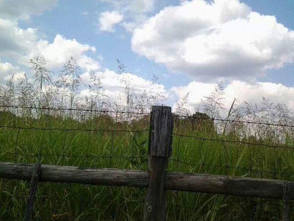 farms ♡